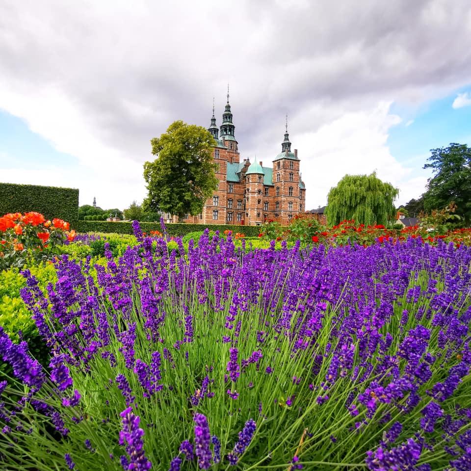 Castello di Rosemborg Copenaghen lavanda in fiore