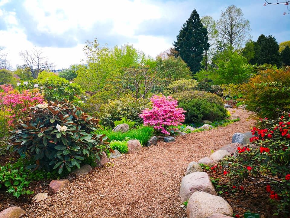 viaggiare-zaino-in-spalla-giardino-botanico-copenaghen-4