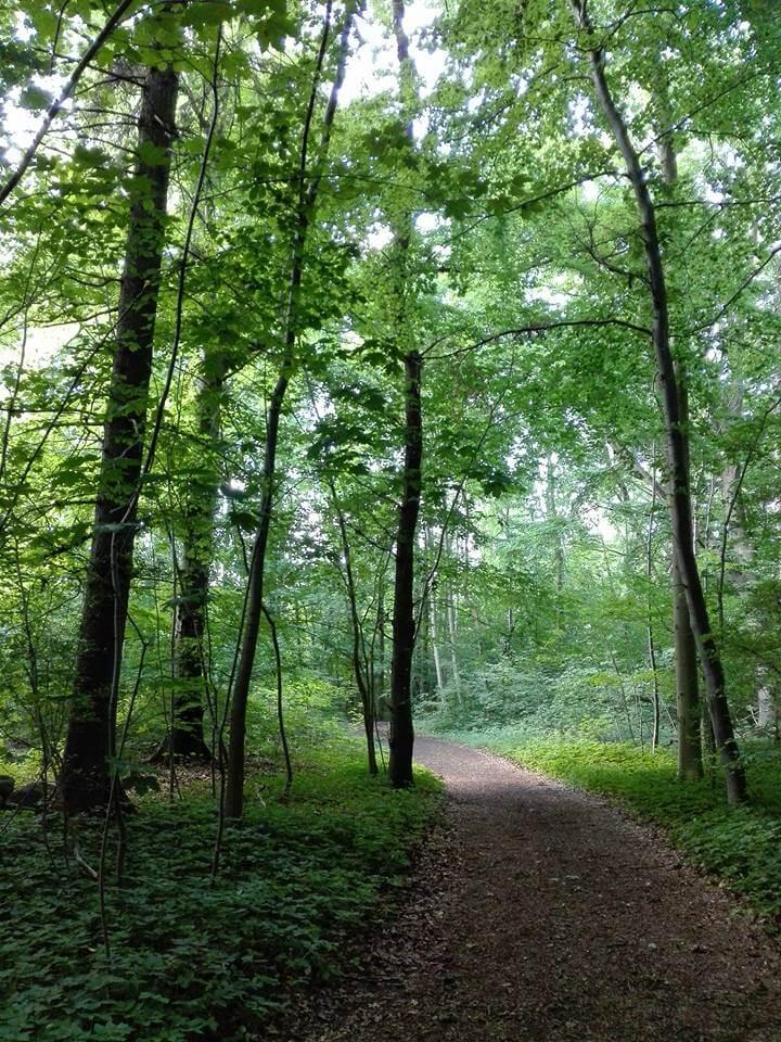 viaggiare-zaino-in-spalla-boschi-e-sentieri-in-danimarca