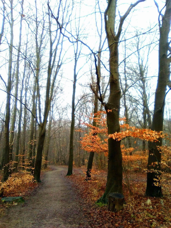 viaggiare-zaino-in-spalla-bosco-danimarca-pilgrimsrute