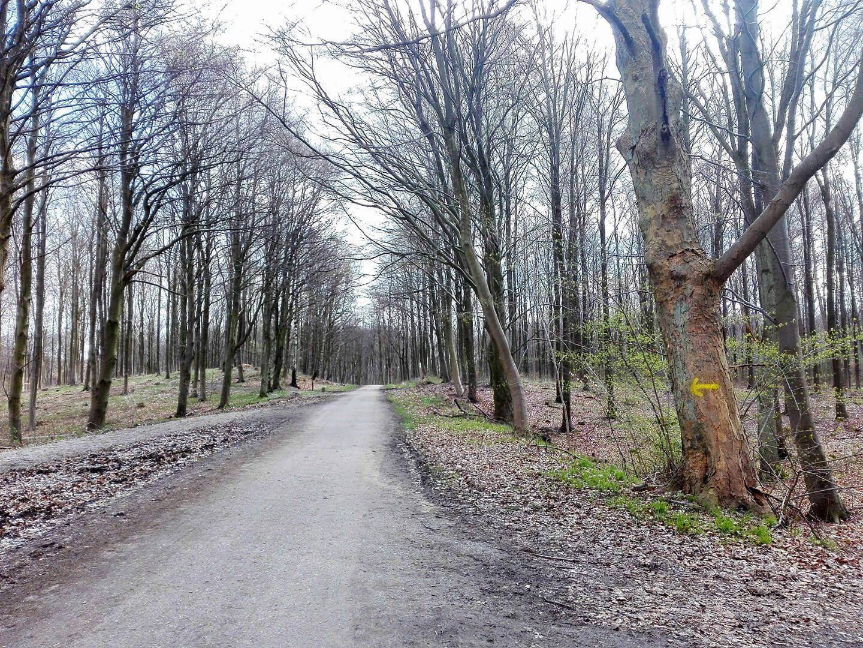 viaggiare-zaino-in-spalla-pilgrimsrute-bosco-freccia-gialla