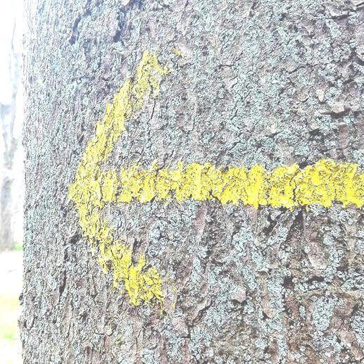 viaggiare-zaino-in-spalla-pilgrimsrute-danimarca-freccia-gialla-cammino-di-santiago