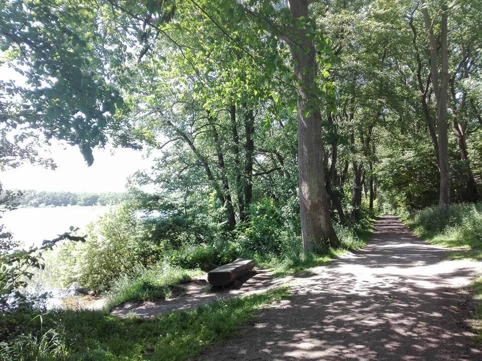 viaggiare-zaino-in-spalla-sentiero-nel-bosco-danimarca