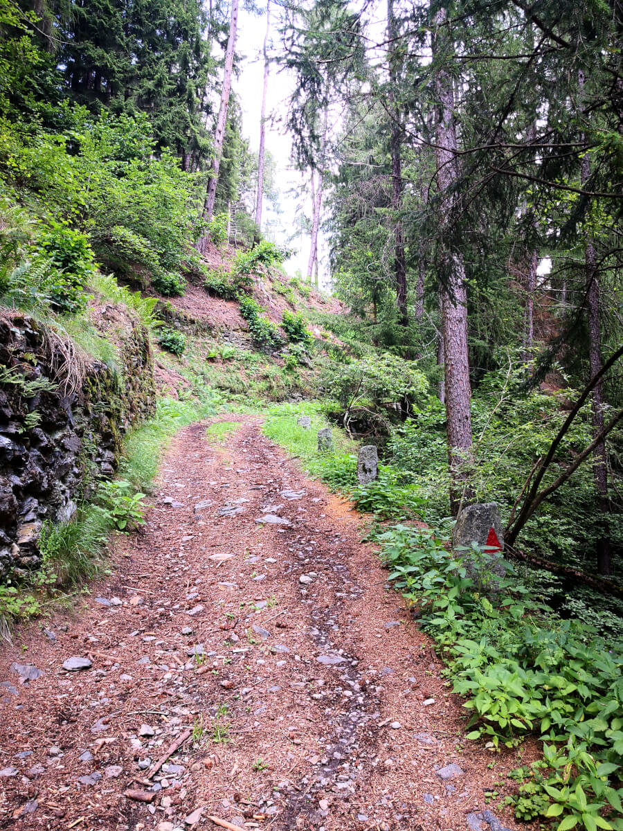 camminando nei sentieri del bosco