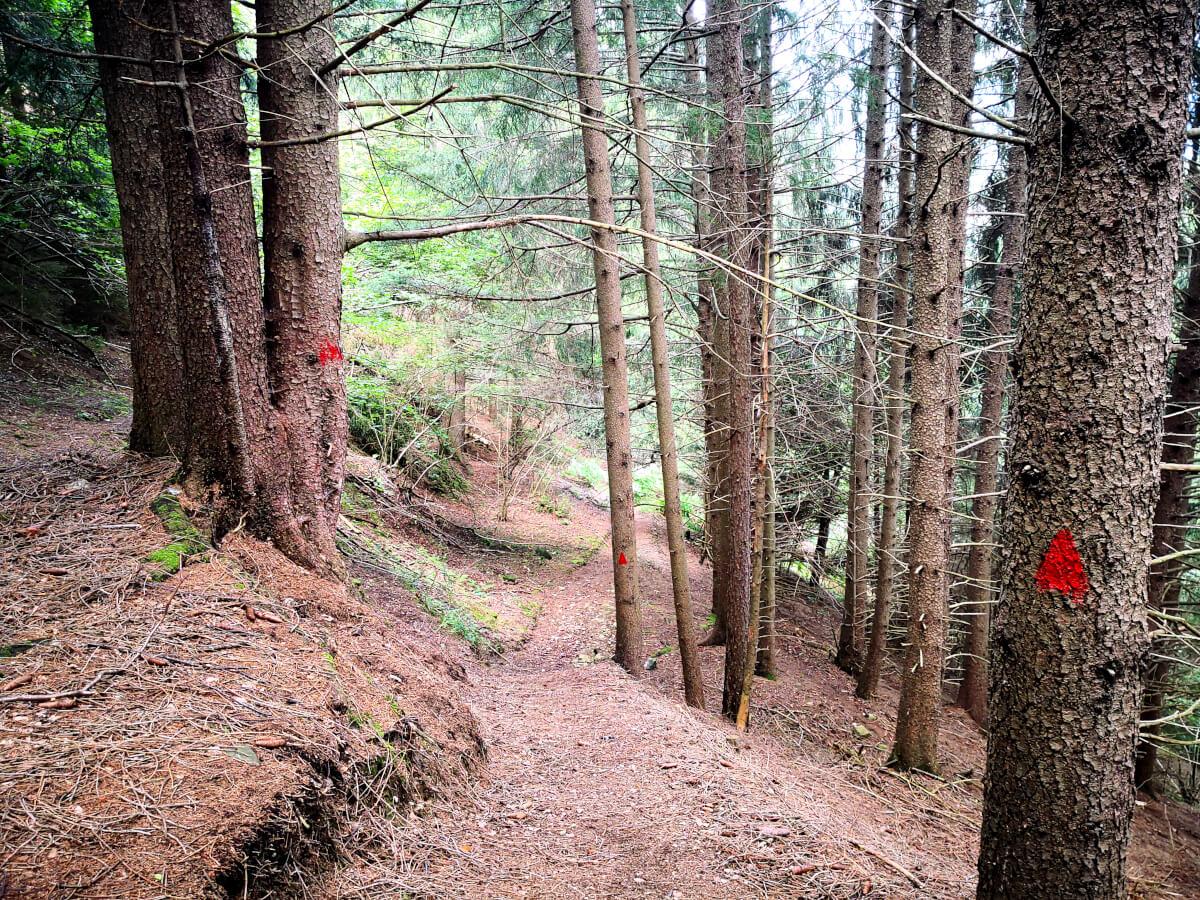 il bosco e le frecce rosse