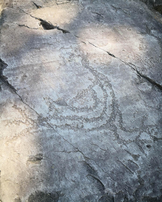 incisioni rupestri valcamonica gallinella