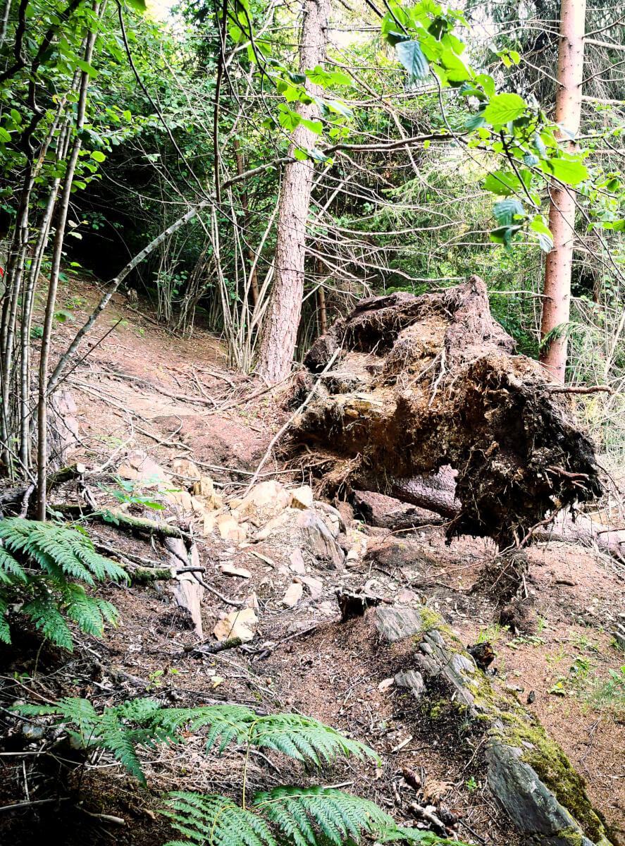 ostacoli nel bosco camminando in valcamonica