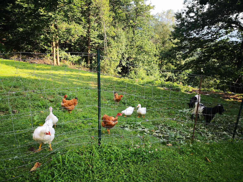 pollaio agriturismo il riccio a grevo