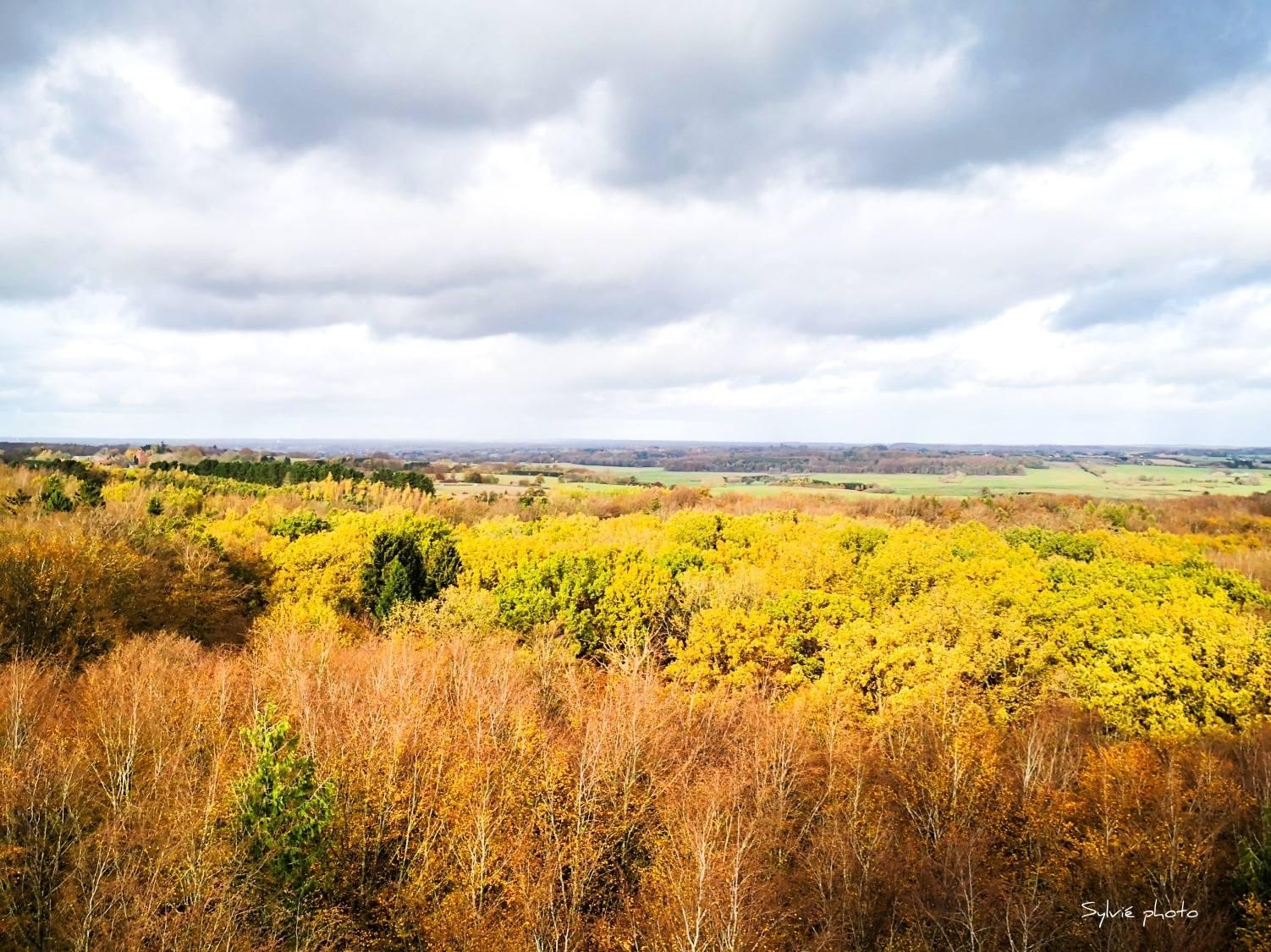 viaggiare-zaino-in-spalla-autunno-in-danimarca-vista-panoramica-dal treetop