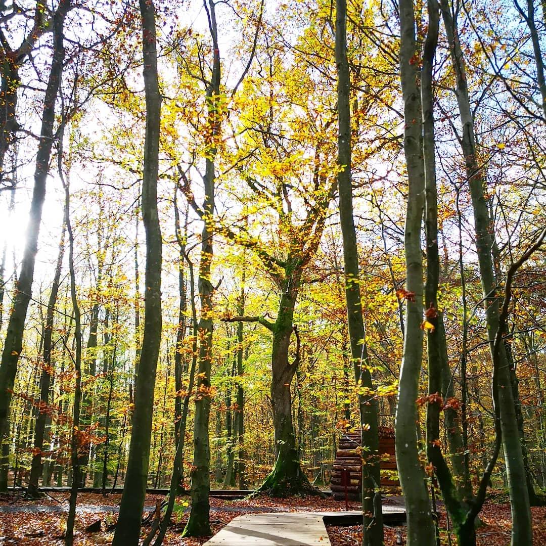 viaggiare-zaino-in-spalla-passerella-nella-foresta-di-gisselfeld-danimarca-1