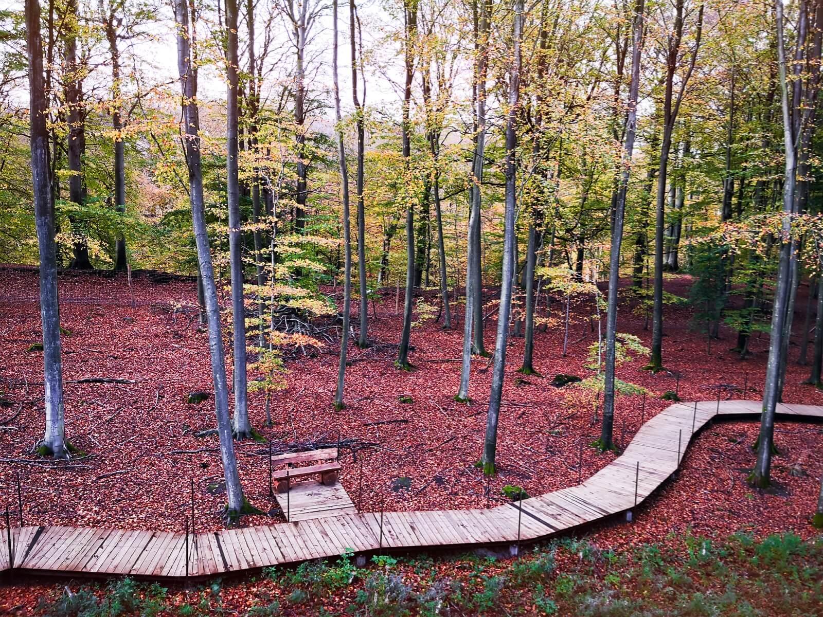viaggiare-zaino-in-spalla-passerella-nella-foresta-di-gisselfeld-danimarca-2