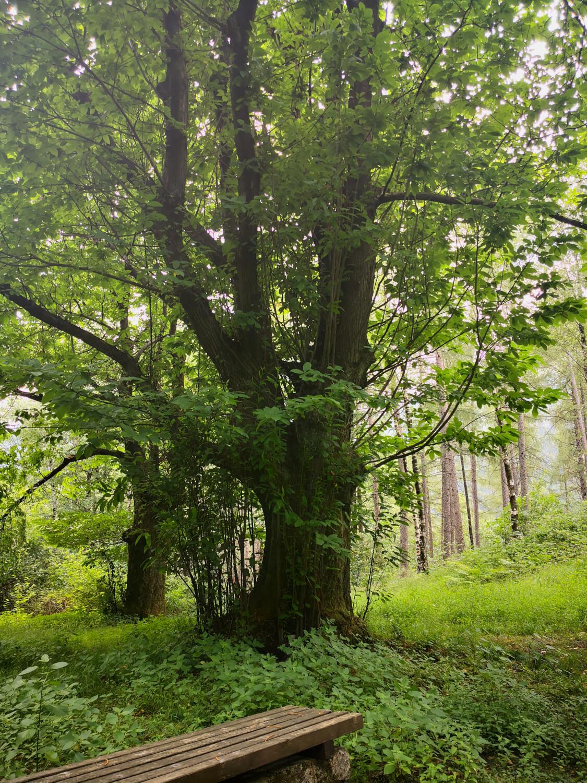 immersi nel bosco lungo il cammino